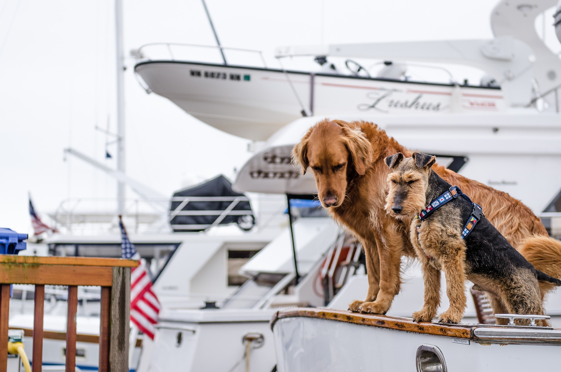 Pets on board! Sailing with your furry friends: Everything you need to know